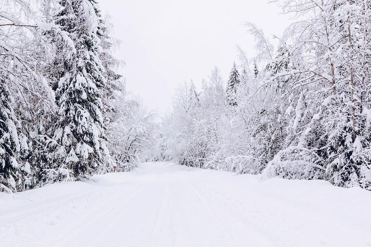 Krajobraz zimą w lesie